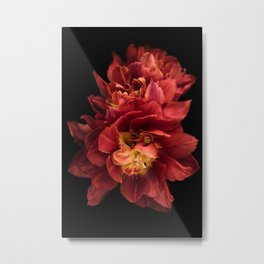 Floral Photography | Red Flower | Plant | Nature Metal Print