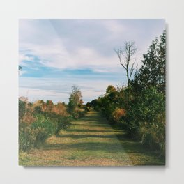 Path through the Field Metal Print