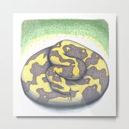 Ball Python Metal Print