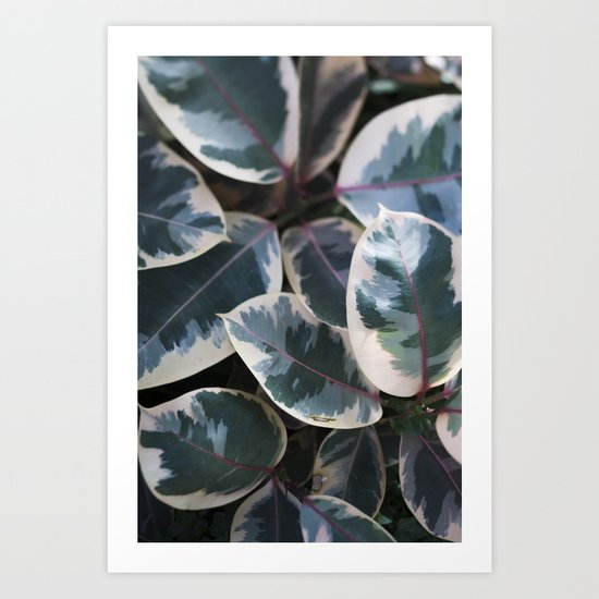 Ficus elastica 'Ruby'  //  Rubber-Plant  // The Botanical Series Art Print