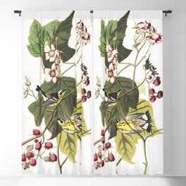 Black and yellow warbler, Birds of America, Audubon Plate 123 Blackout Curtain