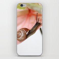 Snail iPhone & iPod Skin