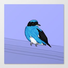 Swallow Tanager Canvas Print