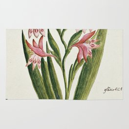 Robert Jacob Gordon - Gladiolus carneus D. Delarochev - 1777 - 1786 Rug