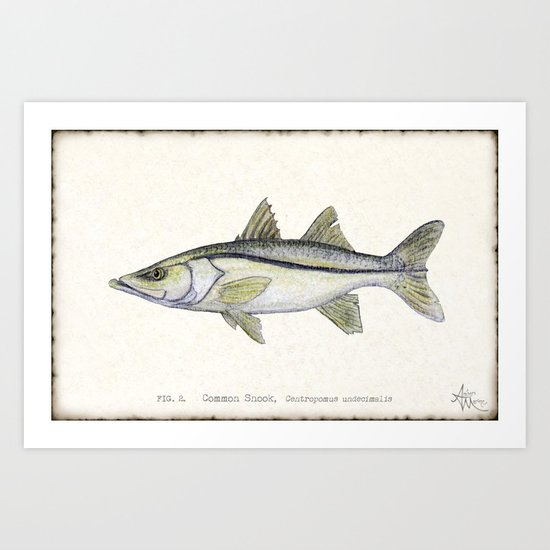 """Snook"" by Amber Marine - Centropomus undecimalis ~ Watercolor Illustration, (c) 2013 Art Print"
