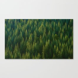 The Green Forest (Color) Canvas Print
