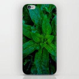 Vernal Verdure iPhone Skin