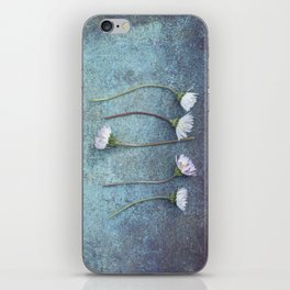 Daisies in a row iPhone Skin