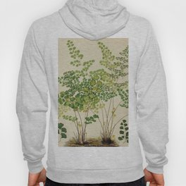 Maidenhair Ferns Hoody