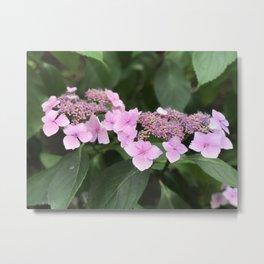 Pink flower in Butchart's Garden Metal Print