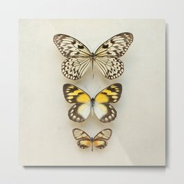 Three Butterflies Metal Print