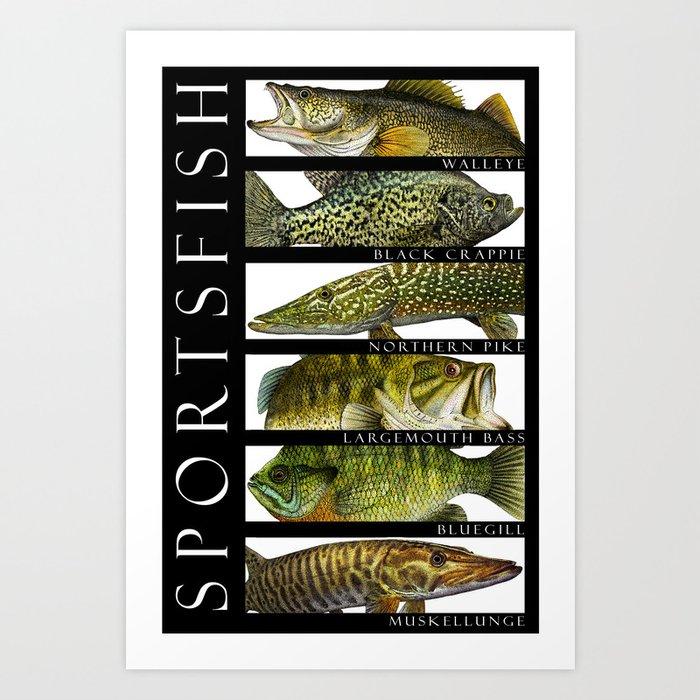 Sport Fish of North America Art Print