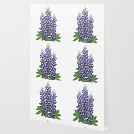 Blue and white lupine flowers Wallpaper