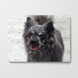 Snow dog! Metal Print