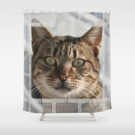 Beautiful Eyed Tabby Cat  Shower Curtain