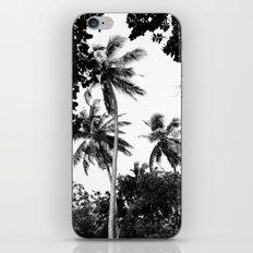 Tall trees iPhone & iPod Skin