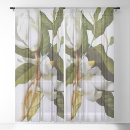 Vintage Botanical White Magnolia Flower Art Sheer Curtain