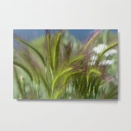 Ripened cheatgrass in green and pink Metal Print