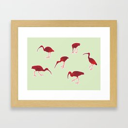 A group of red ibises Framed Art Print