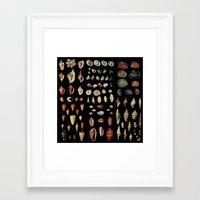 shells Framed Art Prints featuring Shells by Good Sense
