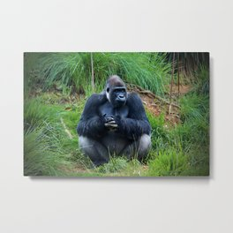 Gorilla Waiting For Lunch Metal Print