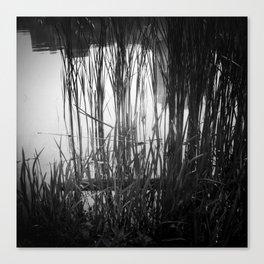 Reeds #1 Canvas Print