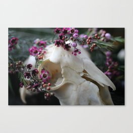 Sheep Skull II Canvas Print