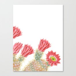 Cacti flower Canvas Print