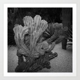 Cactus - BW Photography Art Print