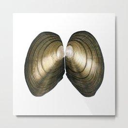 Duck Mussel (Anadonta anatina) Metal Print