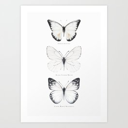 Watercolor Buterflies Art Print