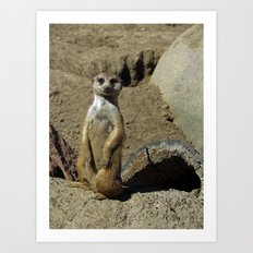 The Most Interesting Meerkat in the World Art Print
