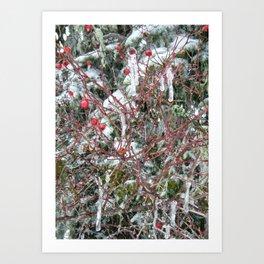 Iced Berries Art Print