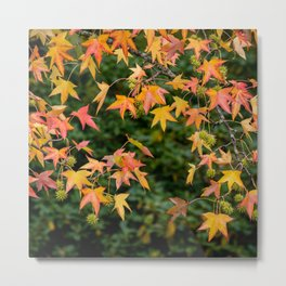 Yellow happy Autumn Metal Print
