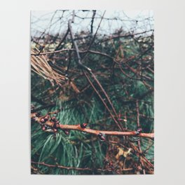 Cut down branches in the rain Poster