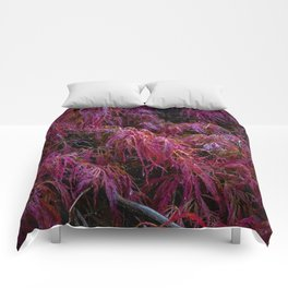 Crimson Queen Comforters