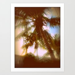 Sun Glare Palms Art Print