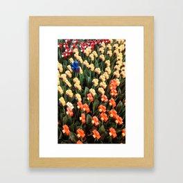 A garden of cameras Framed Art Print