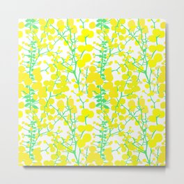 Australian Golden Wattle Flowers in White Metal Print