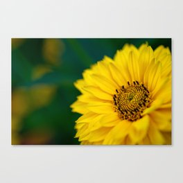 Yellow Daisy - Flower Photography Canvas Print