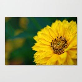 Yellow Daisy - Flower Photography Canvas Print