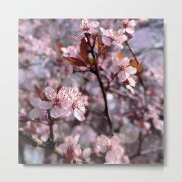 Cherry Plum Tree Pink Metal Print