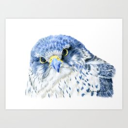 """""""Here's Looking At You"""" painting of a Gyrfalcon by Teresa Thompson Art Print"""
