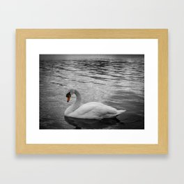 Swan in the Serpentine at Hyde Park Framed Art Print