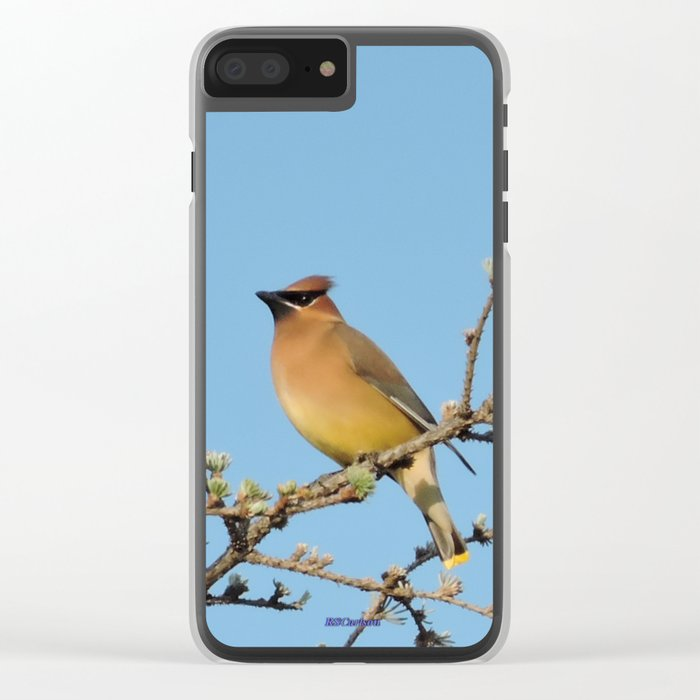 Cedar Waxwing Faces Sunset Clear iPhone Case