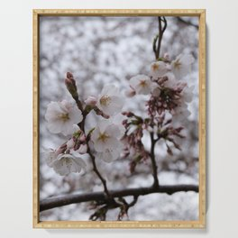 Color photograph of cherry blossoms blooming in spring Serving Tray