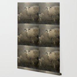 Newborn Lamb Wallpaper