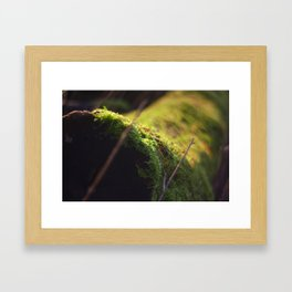 Log Framed Art Print