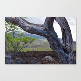 Tree and Maui Lava Flow Canvas Print