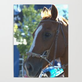 Horse of course Poster